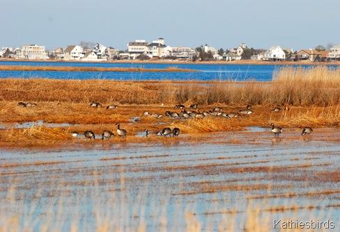 10. more geese-kab