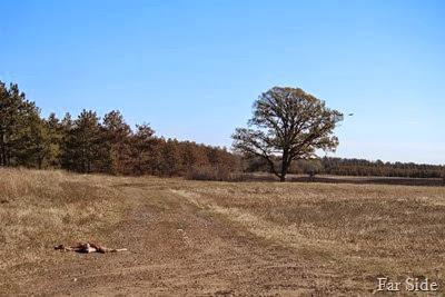 Eagle flying near tree
