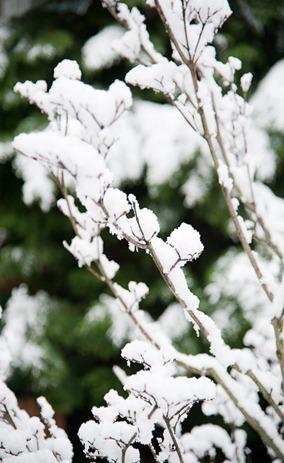 Snow on Sunday-4930