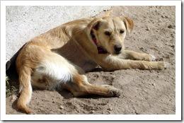 Jan.2012 dogs 015-1