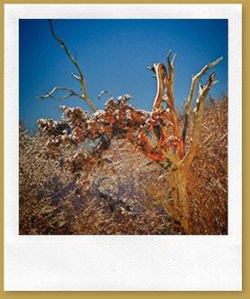 - Gnarled Tree ROT_3709 January 20, 2012 NIKON D3S