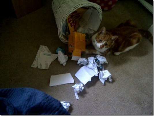 funny-cats-dogs-destroy-house-024