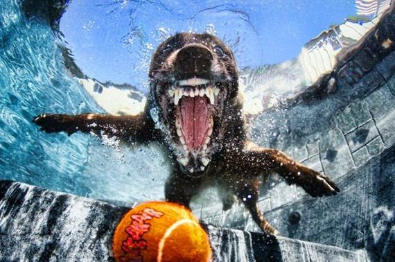 Underwater Dog 02