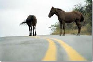 Animales sueltos en ruta -