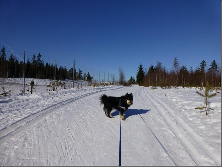ski 007
