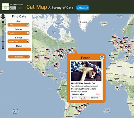 Rede Social Cat Map2