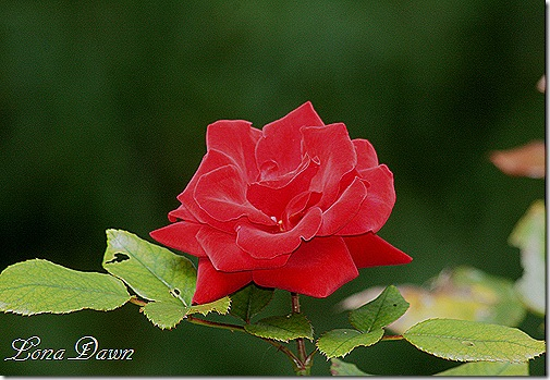 CrimsonRed_Sept26