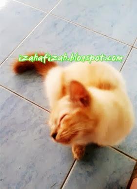 aksi kucing comel.jpg