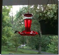 hummingbirds six