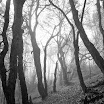 Крым буковый лес.jpg