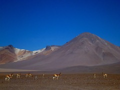 Vicunas and mountains in Southwestern Bolivia.