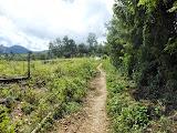 The trail to Doro Oromboha (Dan Quinn, July 2013)