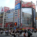 shinjuku pedestrian crossing in Tokyo, Tokyo, Japan