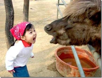horsescream