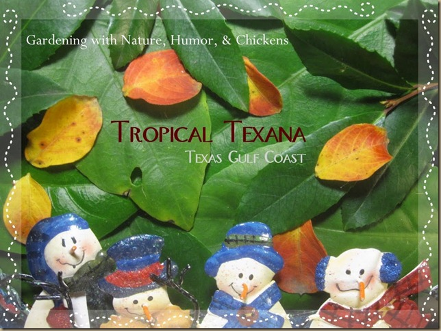 TROPICAL TEXANA_1324353438370