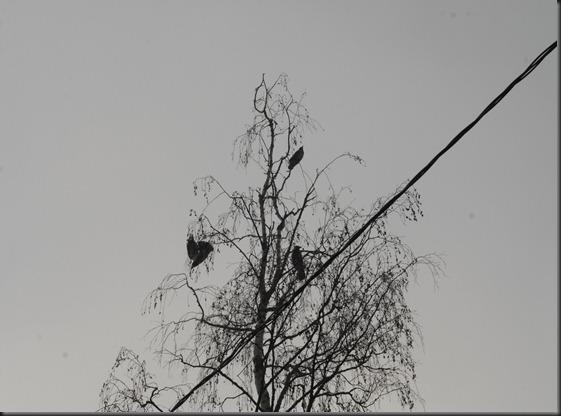 sumu noormarku  keskustassa 035