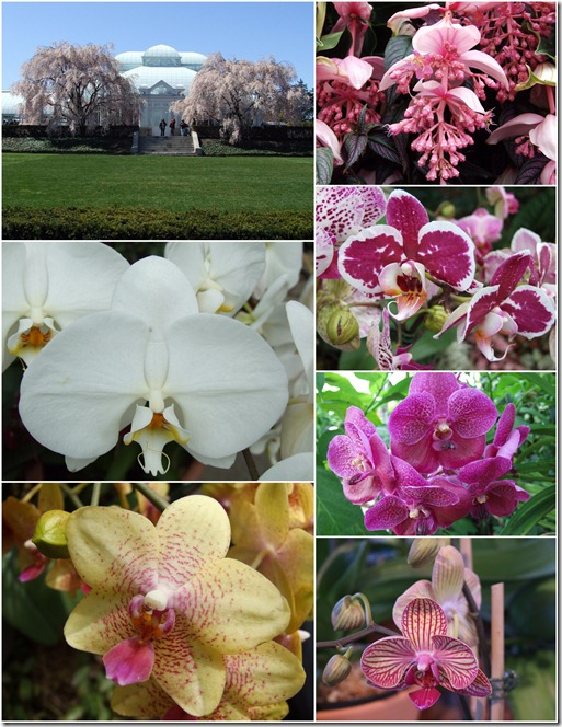 nybg-orchid-show-collage-greenhouse-flowers