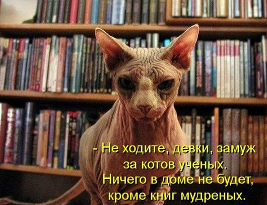 kotomatrix_117