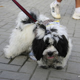 Pet Express Doggie Run 2012 Philippines. Jpg (118).JPG