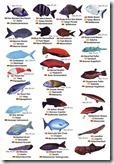 fauna marina I