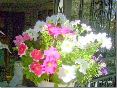 flowers 007
