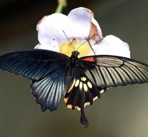 [p3-butterfly%255B8%255D.jpg]