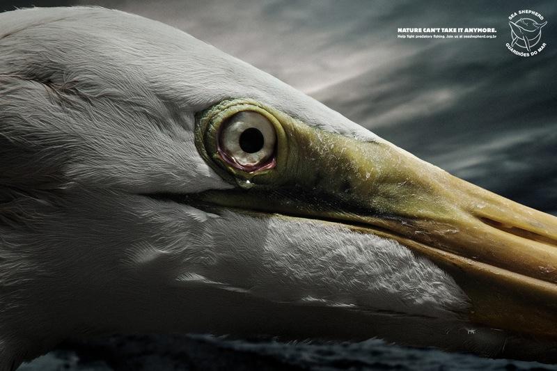 Tears egret