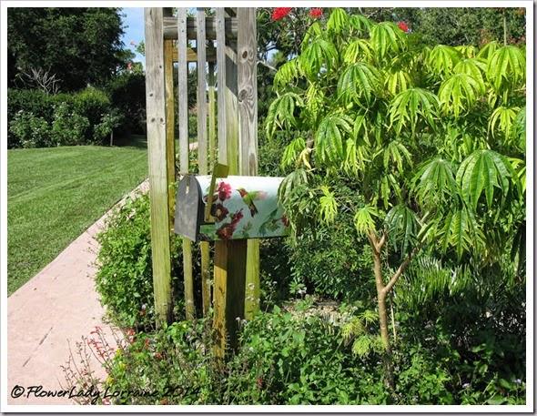 11-20-butterfly-garden3