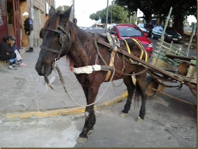 cavalo_maio