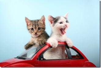 viaggiare-gatto-auto