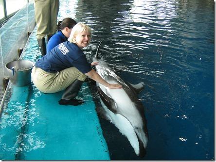 Heart beat Dolphin