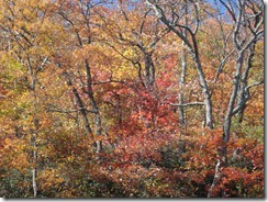 2011 North GA fall colors