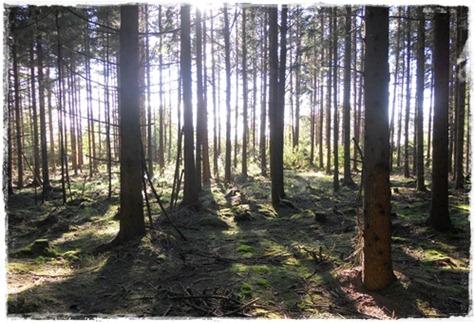 5 skogen