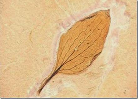 fossil-de-120-milhoe