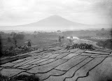 Gunung Cikuray (Thilly Weissenborn, 1910-1940) Courtesy TropenMuseum Archives