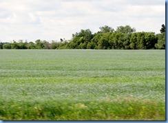 2121 Saskatchewan TC-1 East - flax crop fields