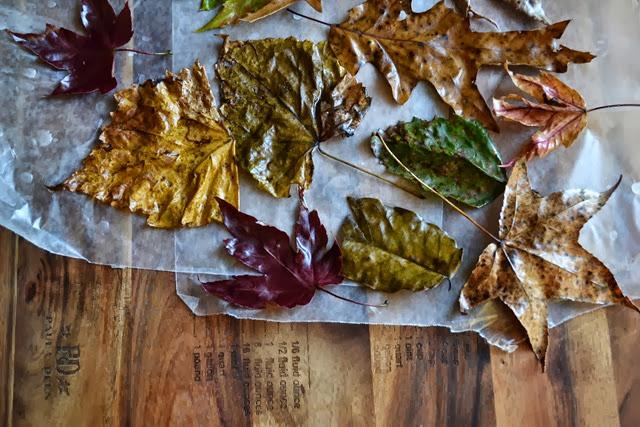 wax leaves 6-1
