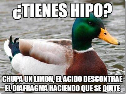 0 pato consejos cosasdivertidas info (1)