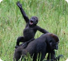 gorilla_waving