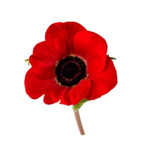 Poppy - St Paul's Online Tribute