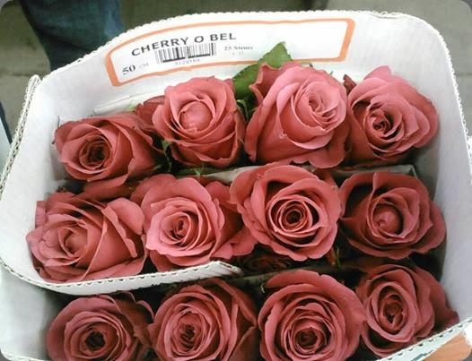 variety 31467_10151640830314193_1930235142_n 'Cherro O' rose