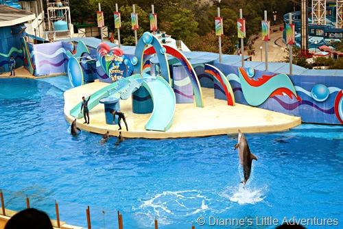 hong kong, ocean park, family, love, dolphin show, dolphins, sea adventure