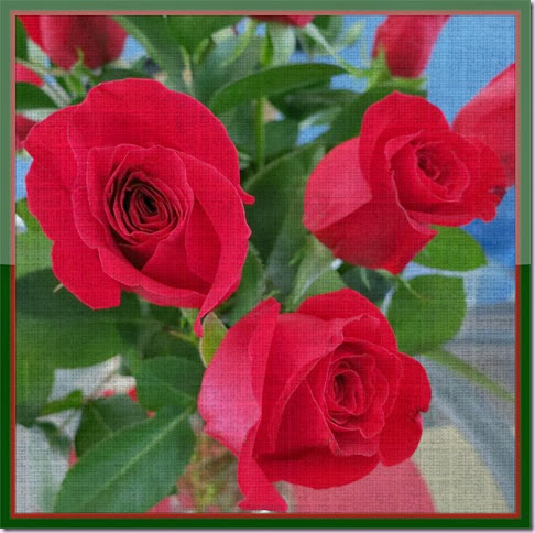 rosesframeIMG_1017