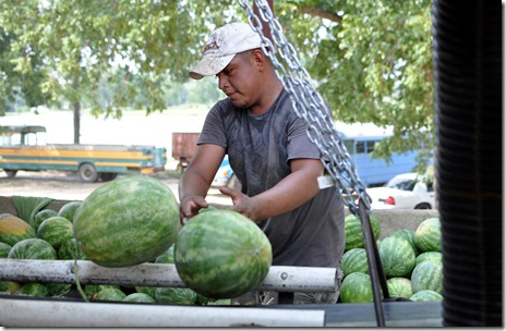 watermelons 11 071211 (31)
