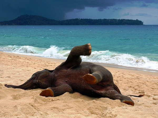 Elephant on the Beach