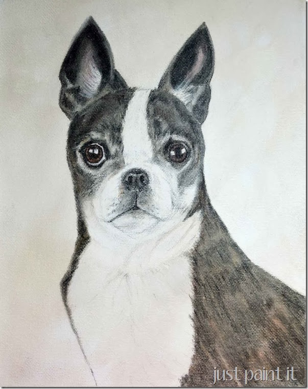 boston-terrier-sketch-M