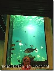 Sydney Aquarium _0066