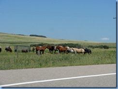 1539 Alberta Hwy 5 East - horses