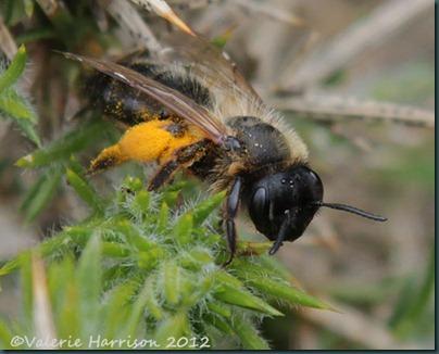 30-bee