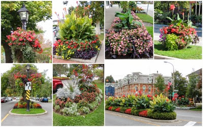 NOTL flower scapes1